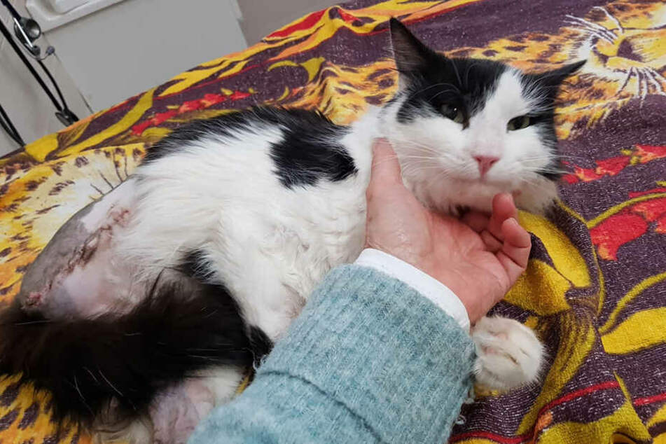 Er verlor leider sein Bein, erholt sich aber dank der tollen Behandlung Stück für Stück.