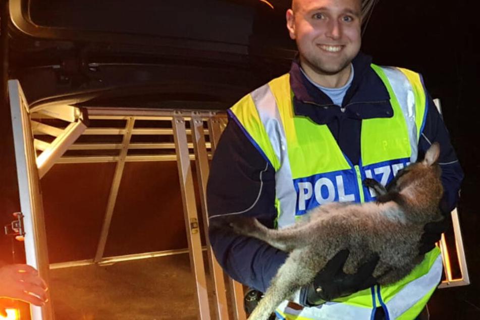 Ein Polizist mit dem erfolgreich gefangenen Känguru.
