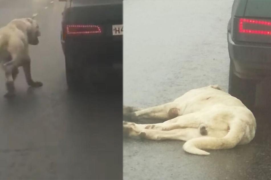 Mann kann nicht fassen, was Autofahrer vor ihm seinem Hund antut und handelt sofort