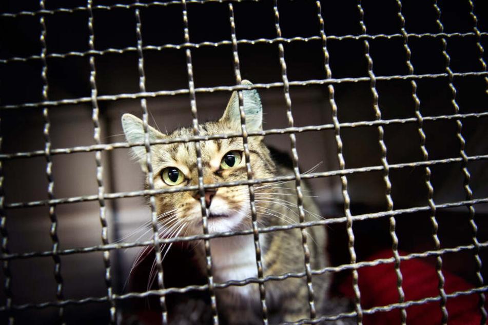Vor allem viele Katzen stranden im Tierheim.