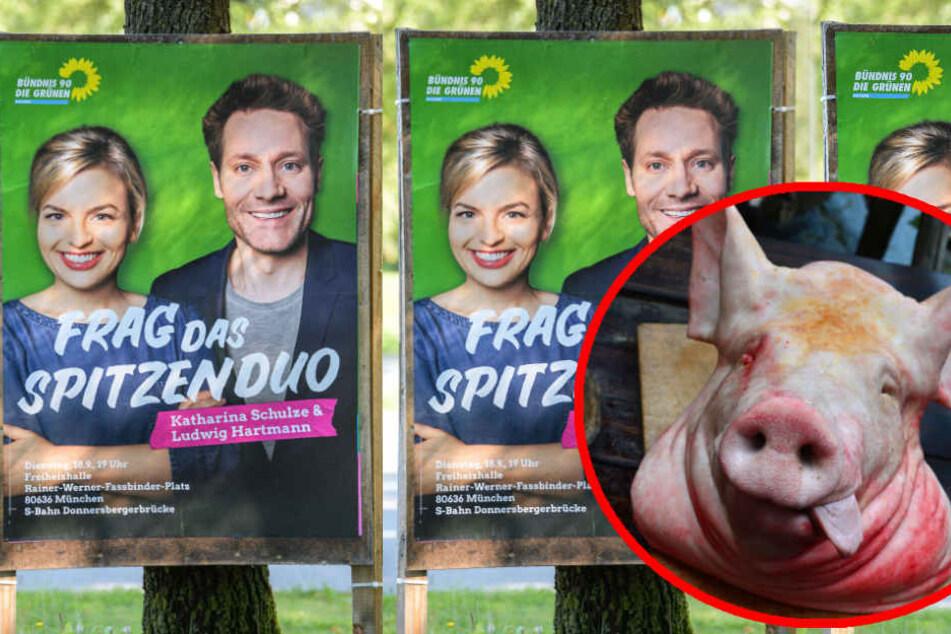 Widerliche Einschüchterung: Unbekannte legen Schweinekopf vor Grünen-Agentur