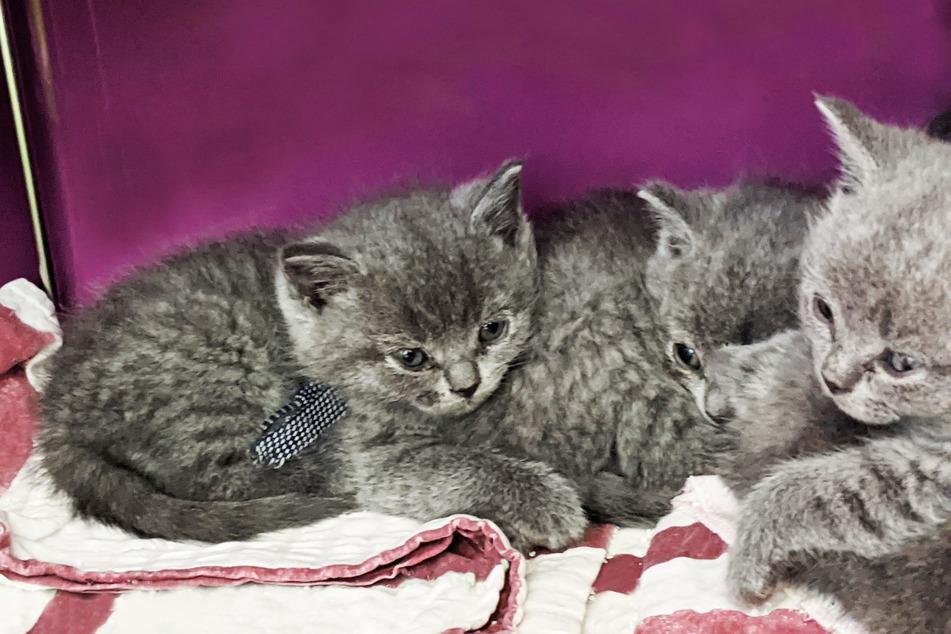 Nun befinden sich die Kätzchen in der Obhut der städtischen Tierrettung.