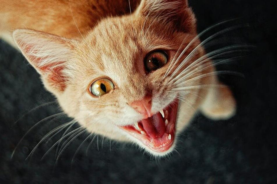 Katzen-Depression: So erkennst Du, ob Deine Katze unglücklich ist