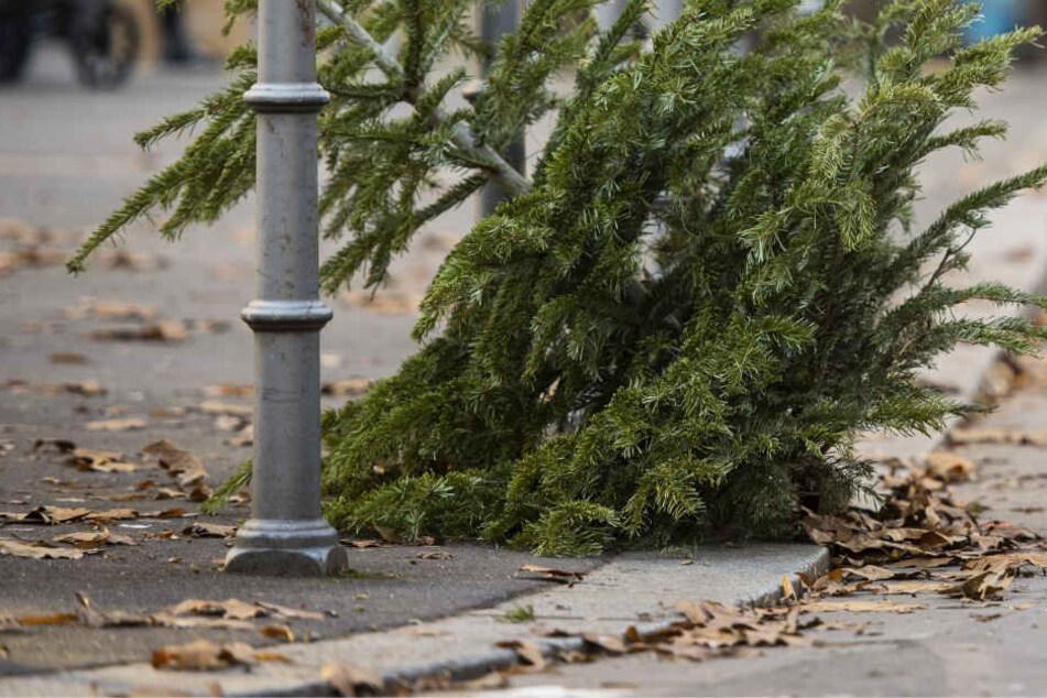 weihnachtsbaum entsorgung diese termine solltet ihr nicht. Black Bedroom Furniture Sets. Home Design Ideas