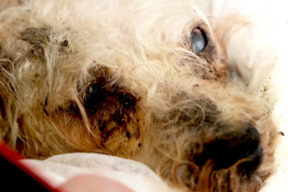Bei der Suche nach dem Besitzer hatte die Polizei Fotos von dem toten Tier veröffentlicht.