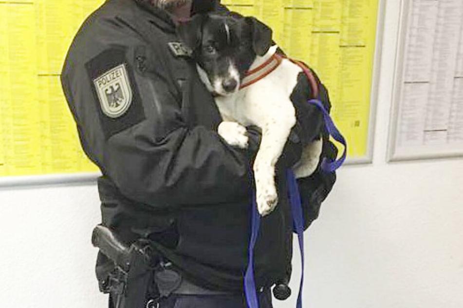 Die Besitzer des kleinen Jack Russel Mix-Terriers konnten noch nicht ermittelt werden.