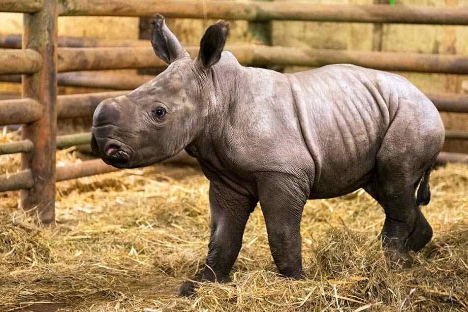 Die kleine Moana kam am 27. Dezember zur Welt.