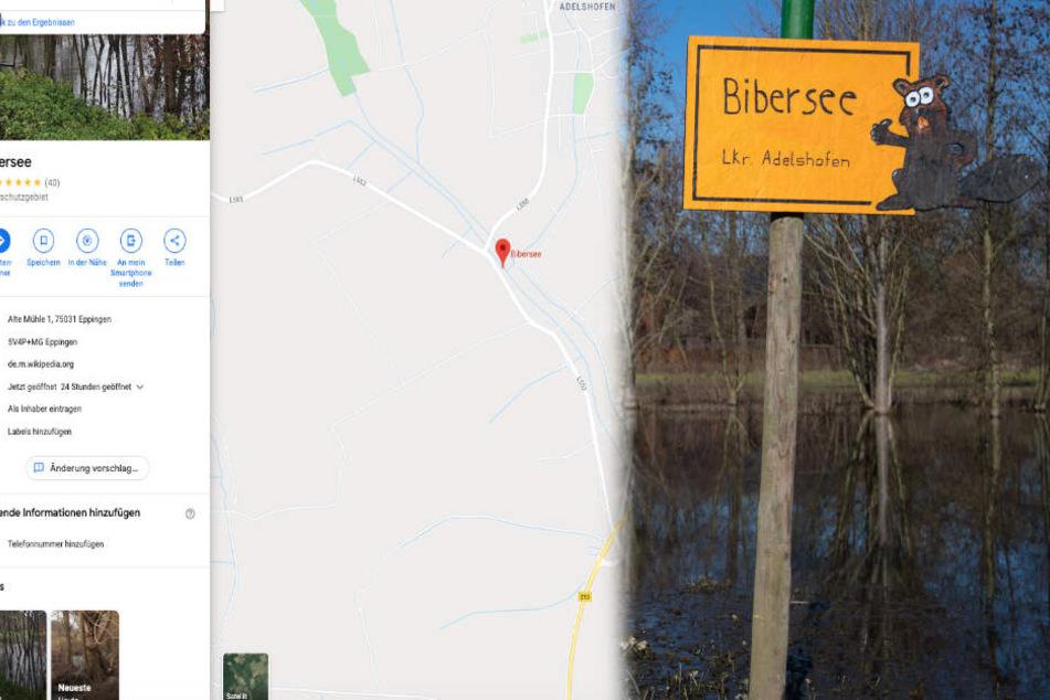 Fleißige Biber bauen Damm und schaffen es auf Google Maps!