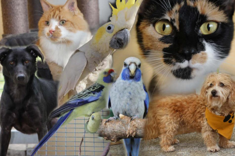 Hunde, Katzen, Papageien: 7 besondere Tiere suchen endlich ein Zuhause