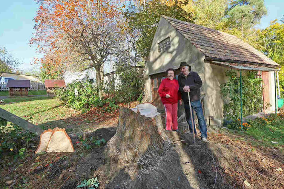 Gespendet hat den Baum Karl-Albrecht Behr gemeinsam mit seiner Frau Inge.