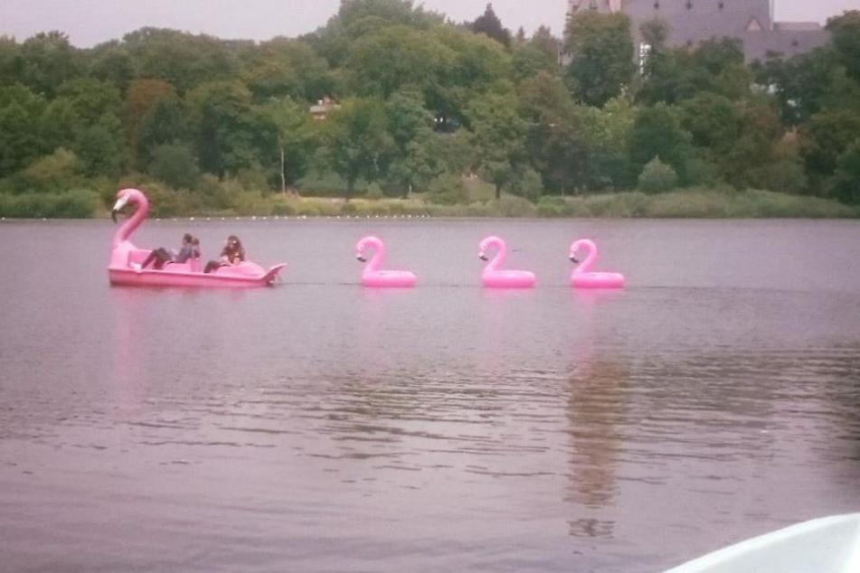 Diese niedliche Flamingofamilie mit Tretboot-Mama und aufblasbaren Flamingo-Küken sorgte für Verblüffung am Schlossteich.