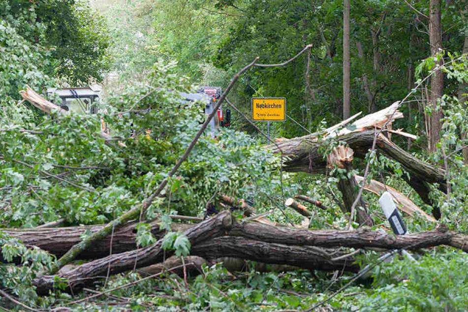 Rund um Neukirchen/Pleiße blockierten umgestürzte Bäume die Straßen.
