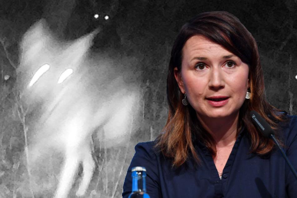 Nach Abschuss der Wolf-Hybriden: Ermittlungen gegen Ministerin gehen weiter