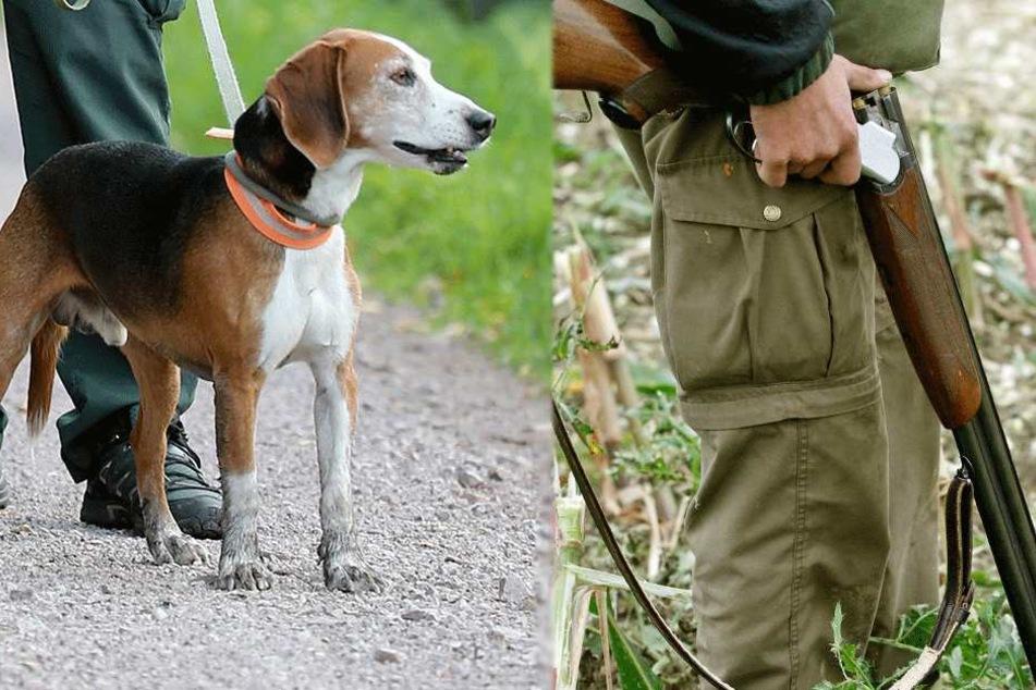 Der Hund trat auf den Abzug des Gewehrs und traf den Jäger (Symbolbilder).