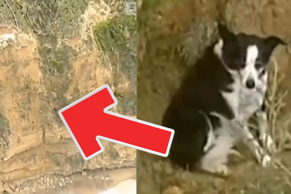An steiler Klippe gefangen: Doch dieser Hund ist ein echter Glückspilz!