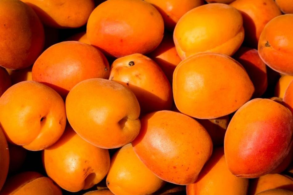 Aprikosen belegen Platz 11 der beliebtesten Obstsorten der Deutschen