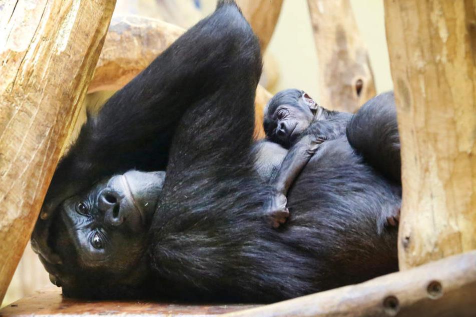Hier klammert sich der kleine fest an seine Mutter.