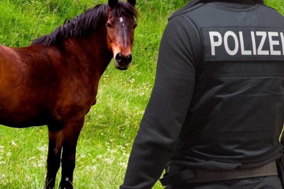 Schnittwunde am Hals zugefügt: Pferdeschlitzer misshandelt Stute auf Koppel