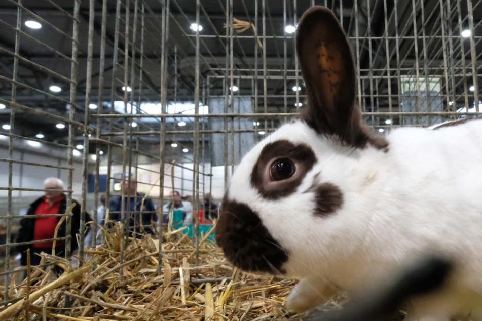 Ein Kaninchen in einem Käfig.