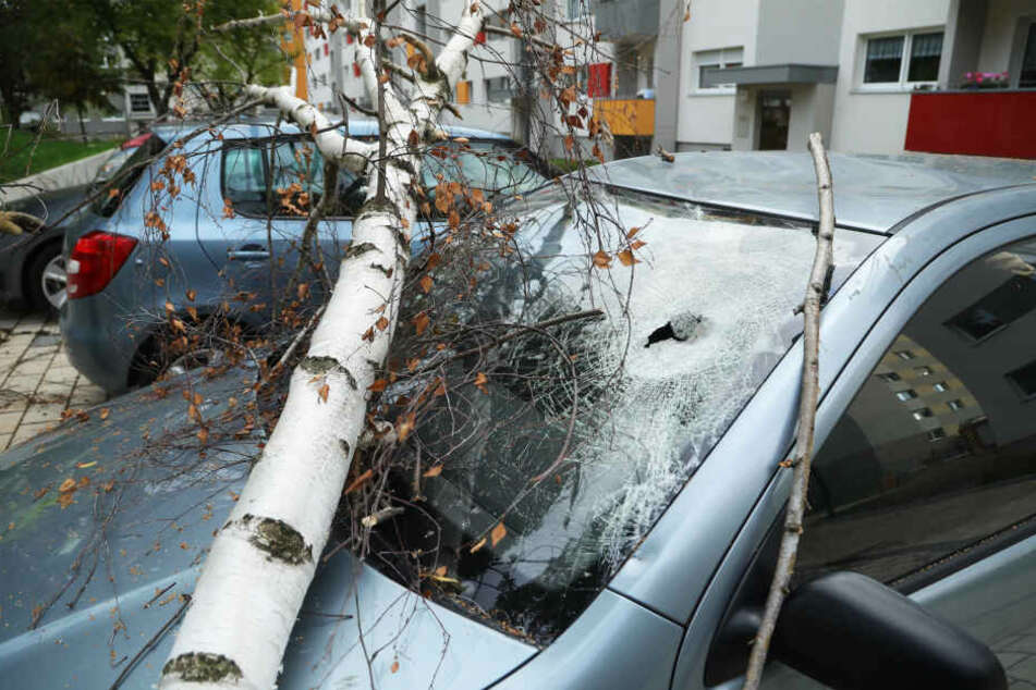 Ein Baum stürzte auf gleich zwei Skodas in Dresden Gorbitz.