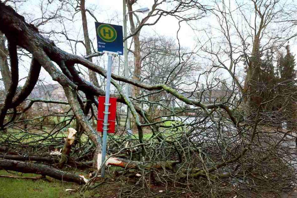 """Zahlreiche Bäume wurden von dem Sturmtief """"Bennet"""" rausgerissen."""