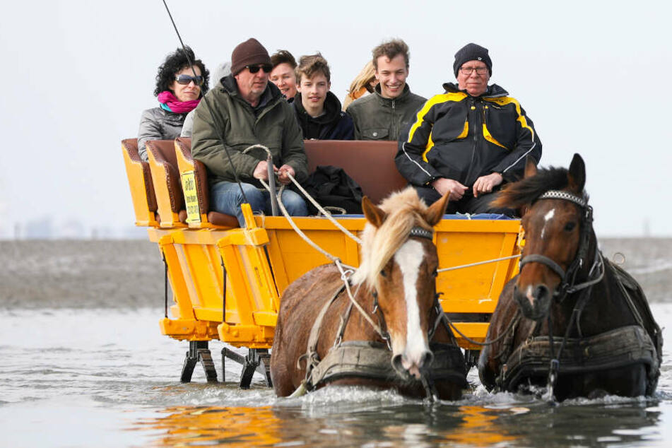 Touristen fahren auf einer Kutsche durchs Watt zwischen Cuxhaven und der Insel Neuwerk. Das soll nach Willen von Peta verboten werden.