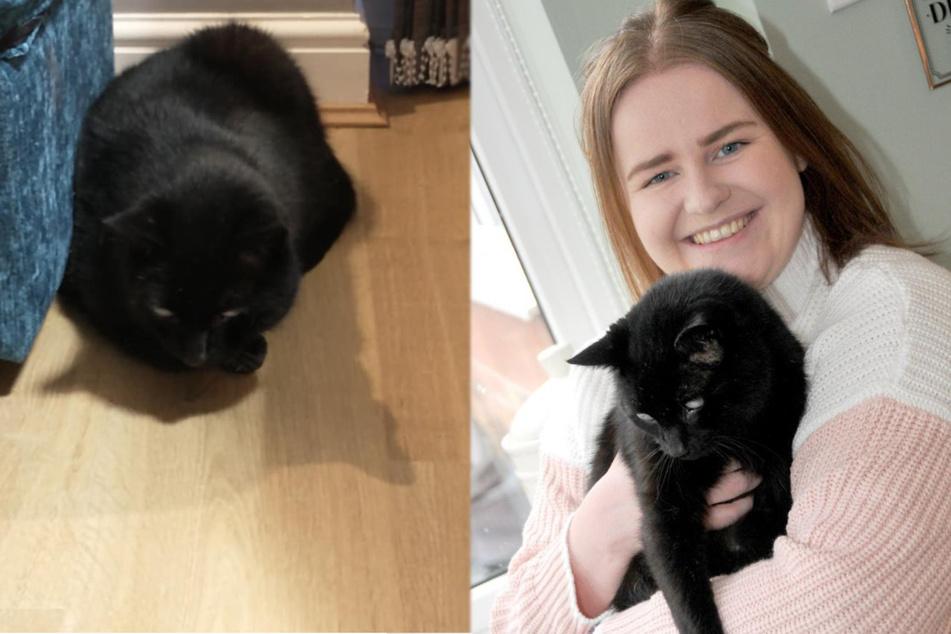 Katze wird seit fast 11 Jahren vermisst: Dann trifft ihr Frauchen der Schlag