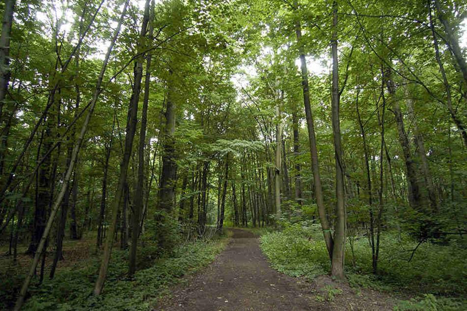 Auf dem Gebiet des ehemaligen Stausees soll nun ein Naturgebiet entstehen- ähnlich des Auenwaldes.