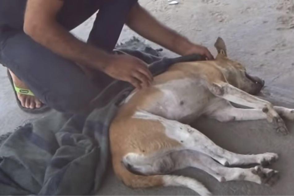 Einsamer Hund kollabiert und heult vor Schmerzen, dann zeigt endlich jemand Herz