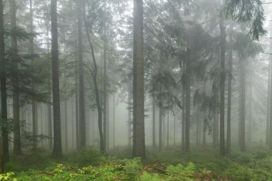 Der Mann wurde in einem Waldstück gefunden. (Symbolbild)
