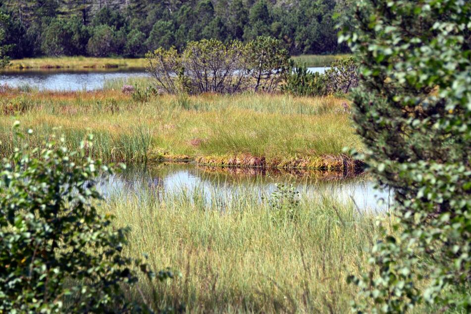 Blick auf den Hohlohsee mit seinem Moor im Naturschutzgebiet Kaltenbronn.