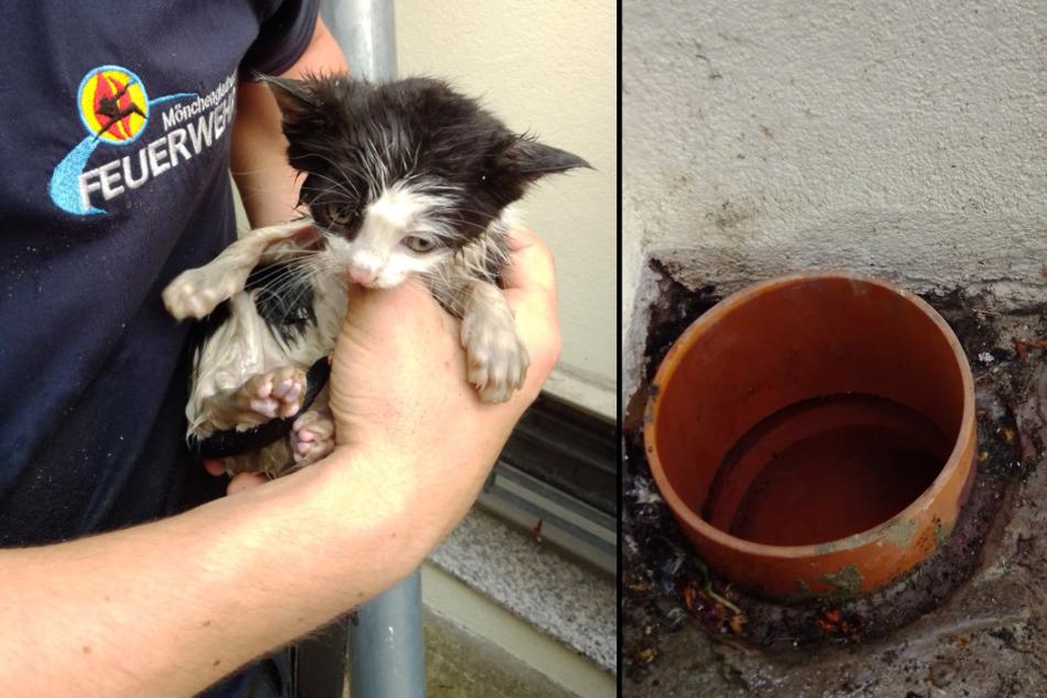 Feuerwehr rettet völlig entkräftete Babykatze