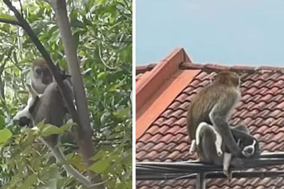 Affe entführt Hund und hält ihn gefangen: Was danach passiert, rührt viele zu Tränen