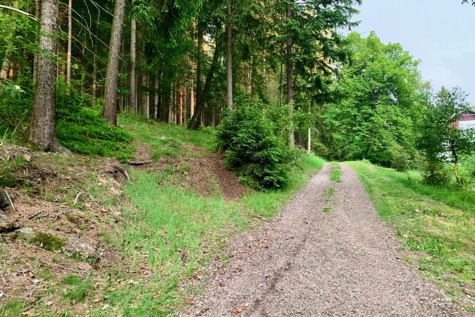 Toter in Sachsen: Wanderer entdeckt Leiche im Kurort