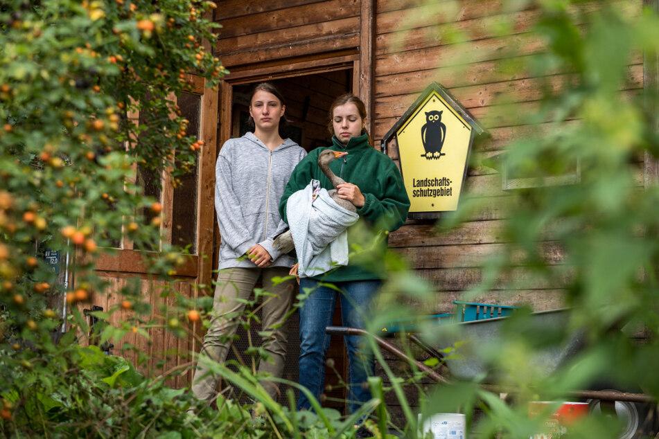 Haben sich ihr Freiwilliges Ökologisches Jahr anders vorgestellt: Maria K. (r.) und Lara P. (beide 19) halten die Wildvogelauffangstation seit Wochen alleine am Laufen.