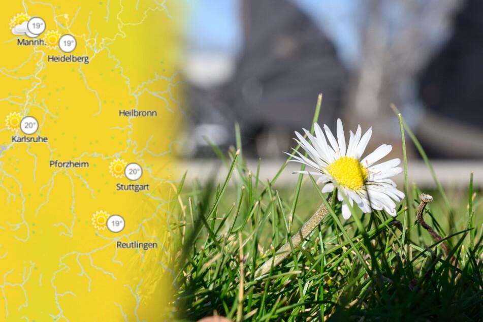 Kommt der Frühling? So sind die Wetteraussichten für Baden-Württemberg