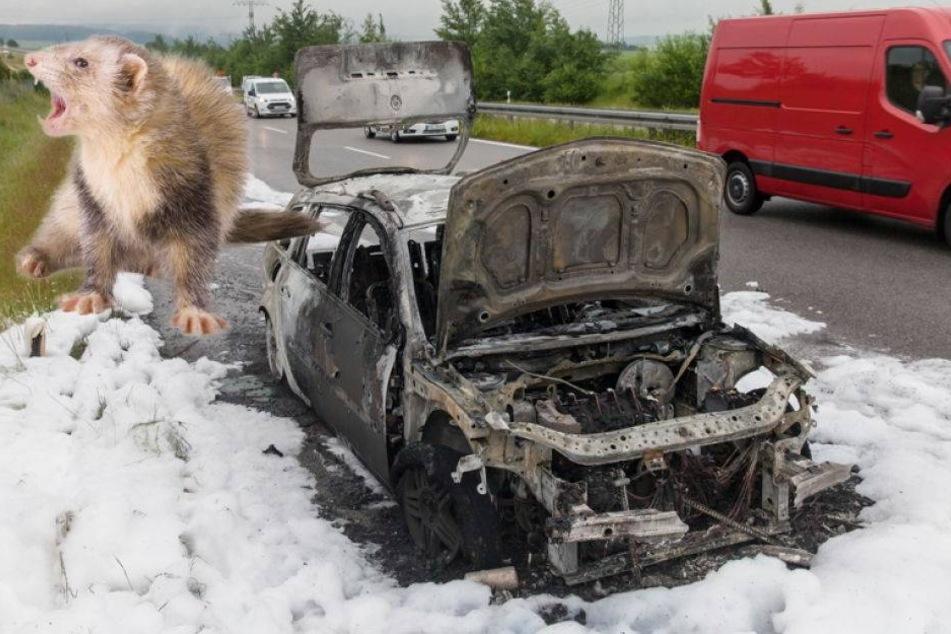 Ein Marder hat dieses Auto auf dem Gewissen