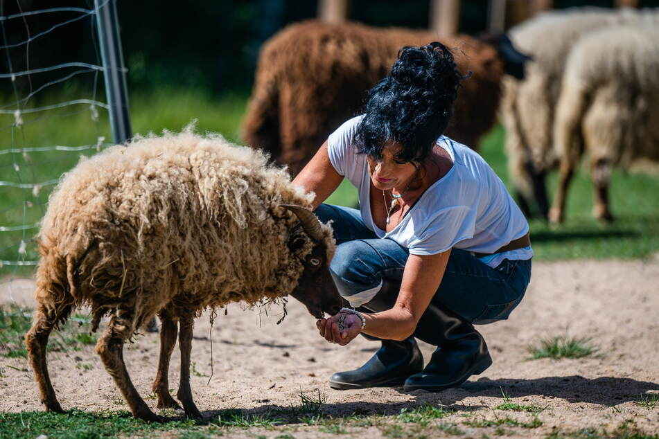 Auch alte Schafe wie Karlchen gehören inzwischen zu den Haus- und Hofbewohnern.