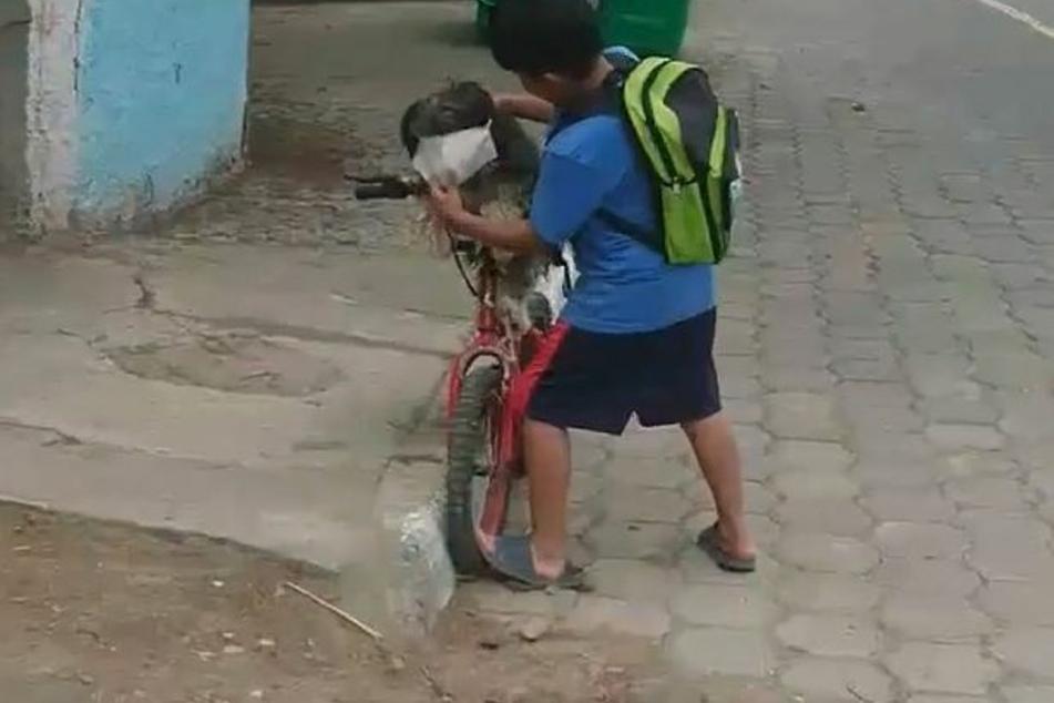 Liebevoll setzt Antony Hernández den Mundschutz auf.