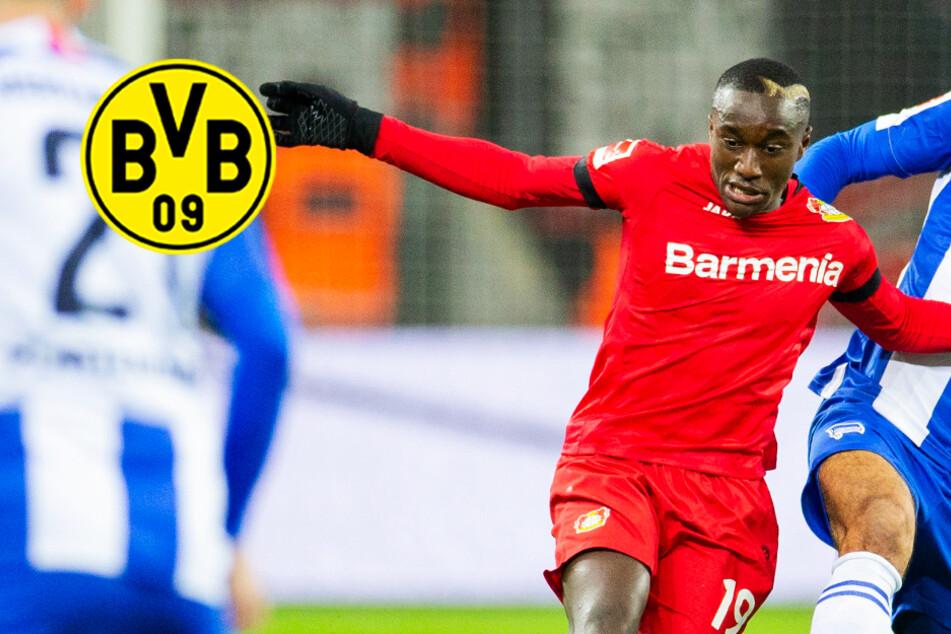 BVB will Leverkusens Flügelflitzer! Bedient sich Dortmund bei der Konkurrenz?