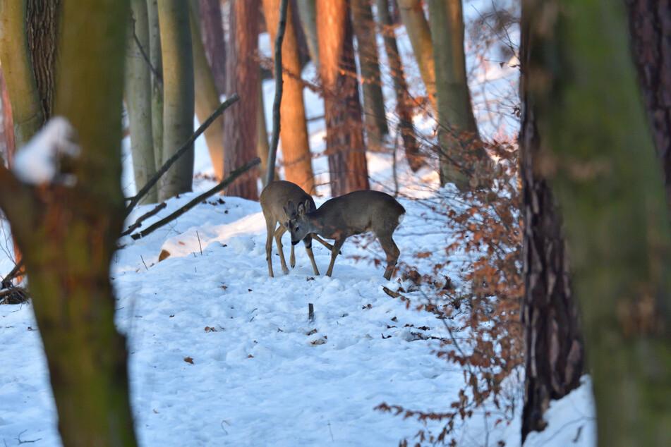 Die extreme Kälte hat NRW fest im Griff: Was ist mit den Tieren?
