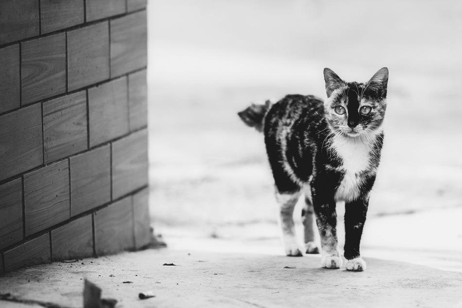 Katze sieht wie überfahren aus, doch die Wahrheit ist noch schlimmer