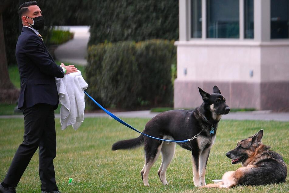 """Hunde von US-Präsident Joe Biden bekommen Gesellschaft: """"Sie steht in den Startlöchern"""""""