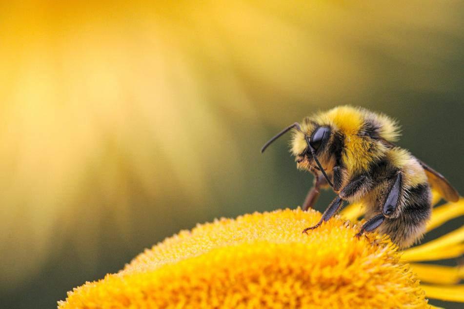 Hilfe für Bienen, Hummeln und Co.: Was ihr jetzt auf Balkon und Terrasse tun könnt
