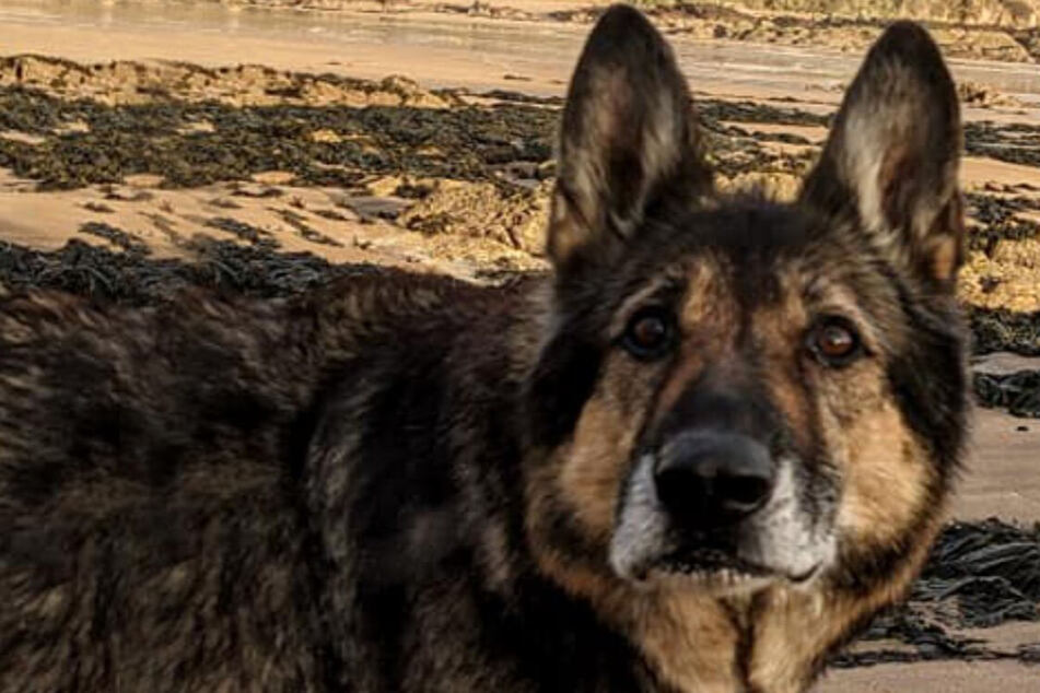 A heartbreaking farewell: Dying dog gets one last week of wishes