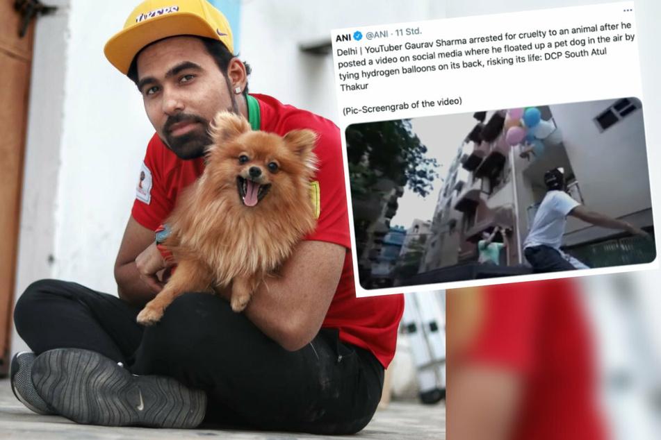 Brisante Szenen: YouTuber bindet Hund an Ballons an und lässt ihn fliegen!