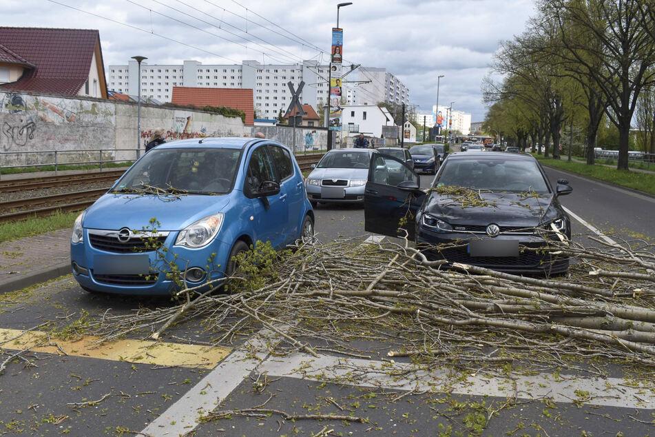Zwei Fahrzeuge wurden kurz vor einer Ampel vom Baum erfasst.