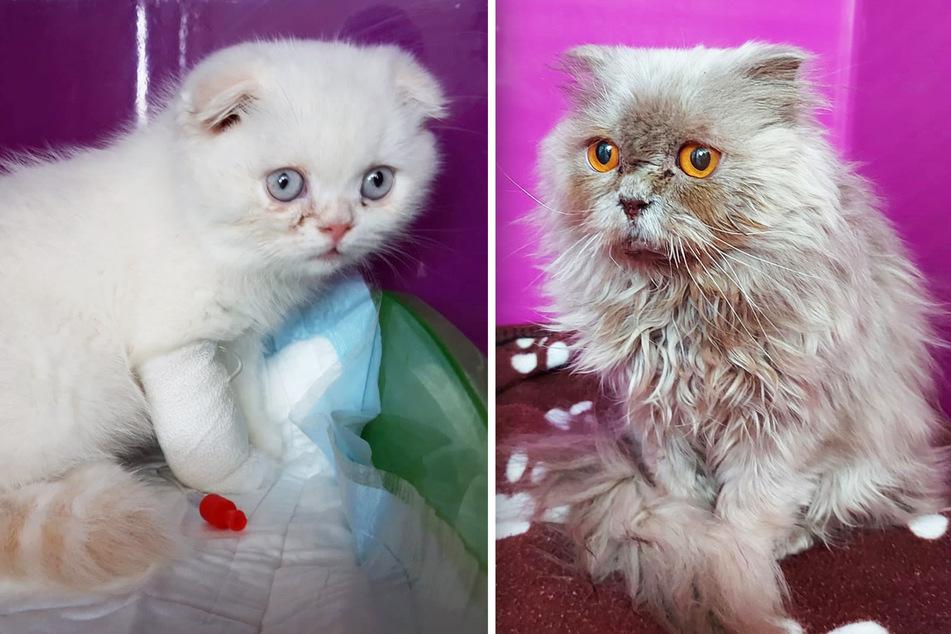 Bildschön, aber eine verbotene Rasse: Wer hat diese Katzen ausgesetzt?