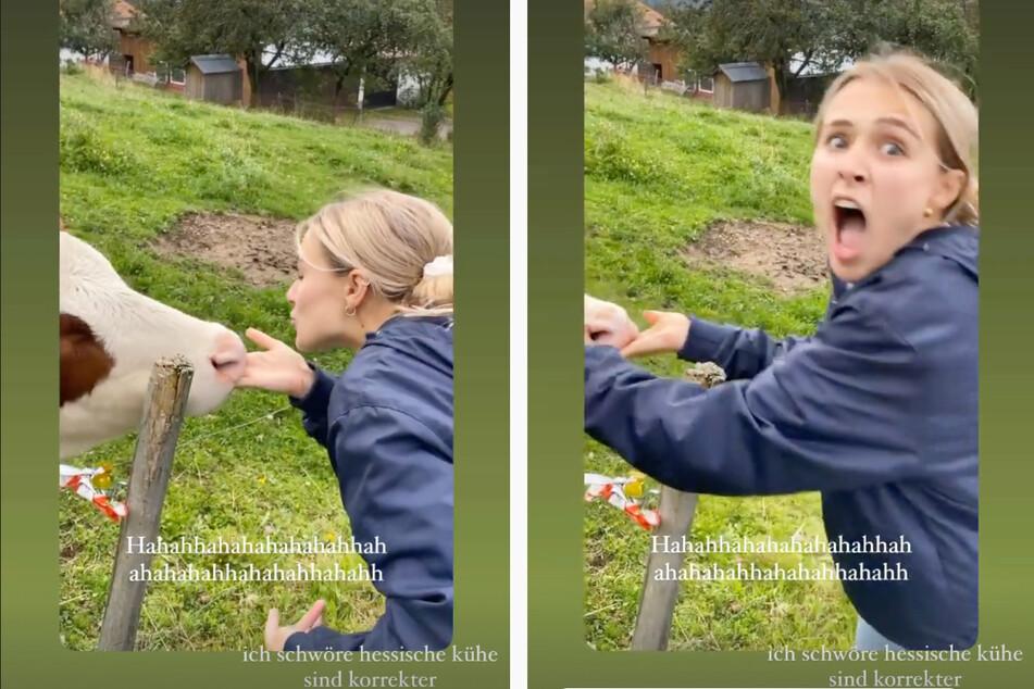 """Beim Spazierengehen traf """"Love Island""""-Greta auf eine freche Kuh und erlebte eine Überraschung."""