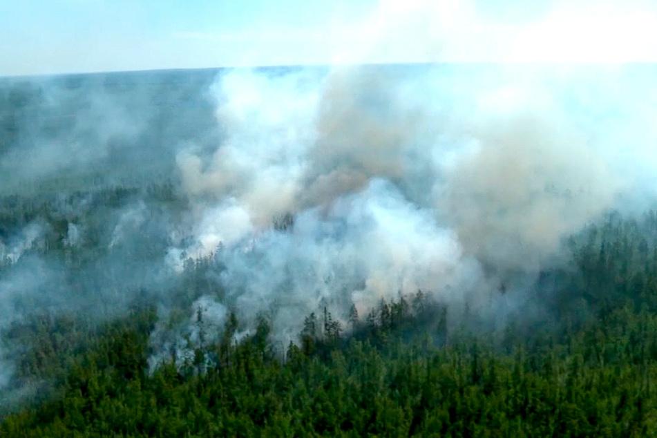 Waldbrände weiten sich weiter aus: Rekordwerte bei den Temperaturen